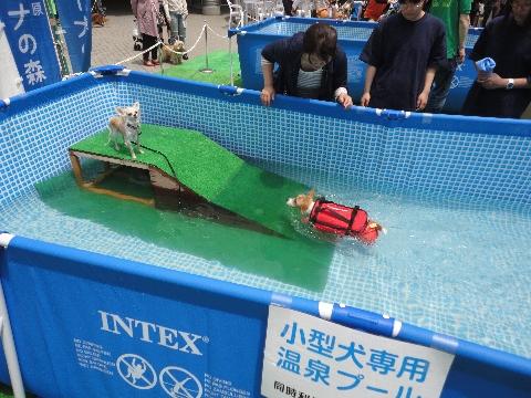 いぬのきもち|犬の温泉|温泉輸送
